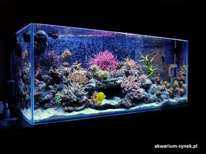 akwarium-420l-synek-14