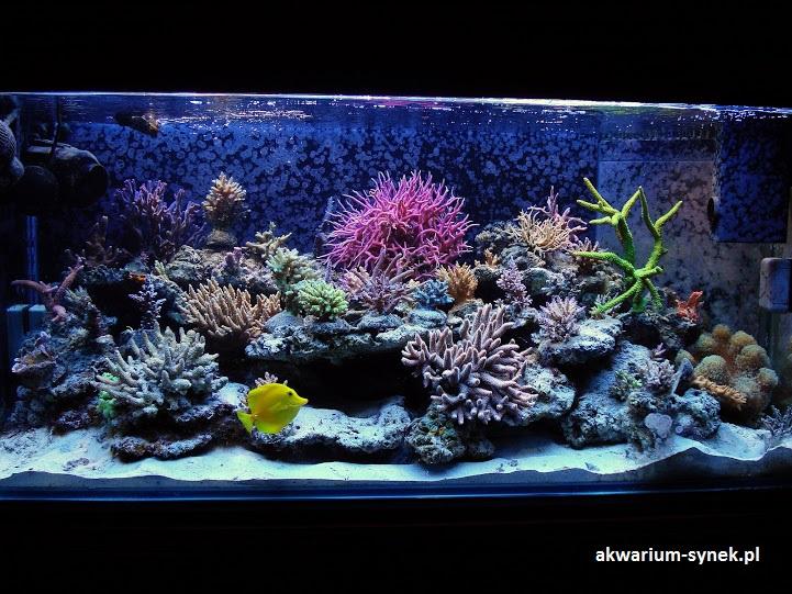 akwarium-420l-synek-15