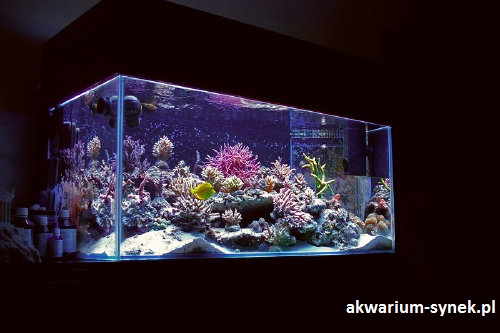 akwarium-420l-synek-19