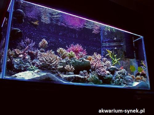 akwarium-420l-synek-20
