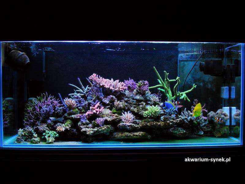 akwarium-420l-synek-21