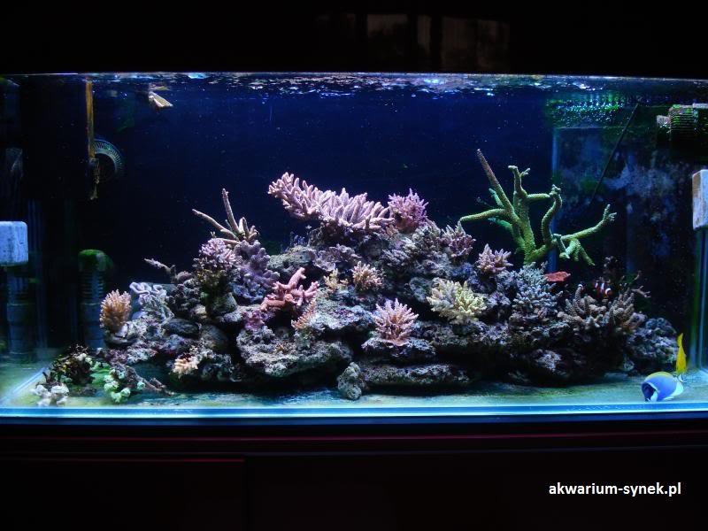akwarium-420l-synek-23