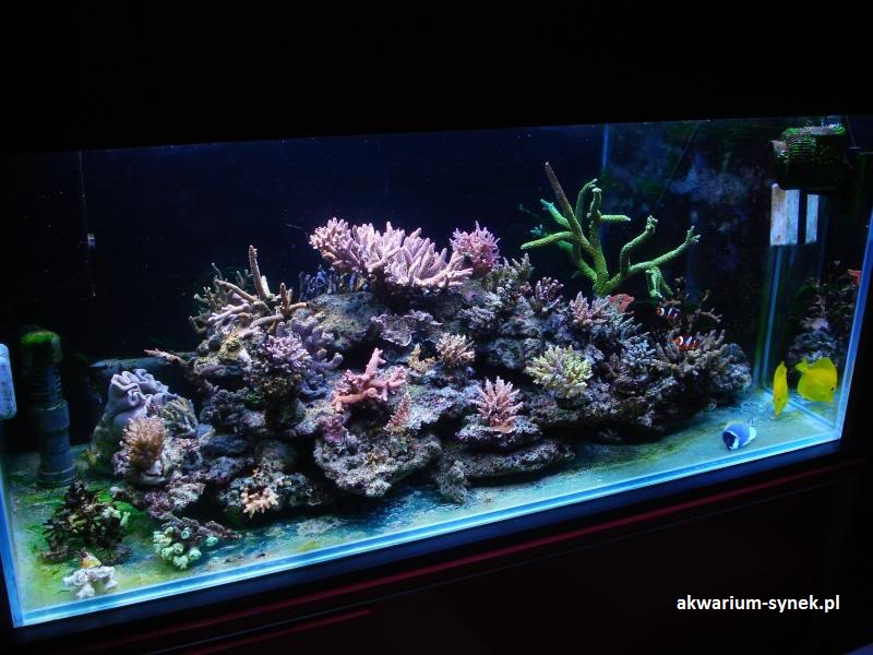 akwarium-420l-synek-24