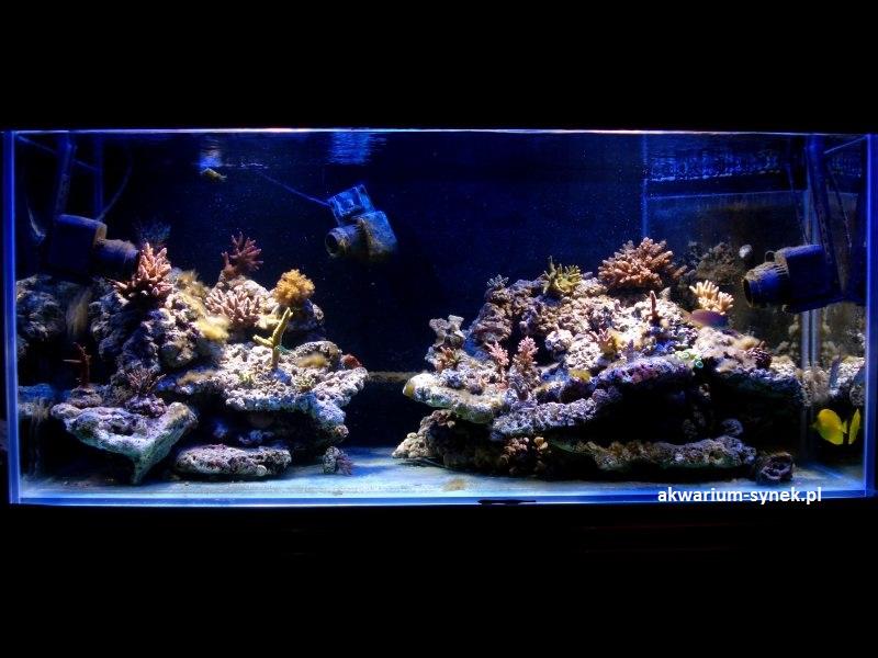 akwarium-420l-synek