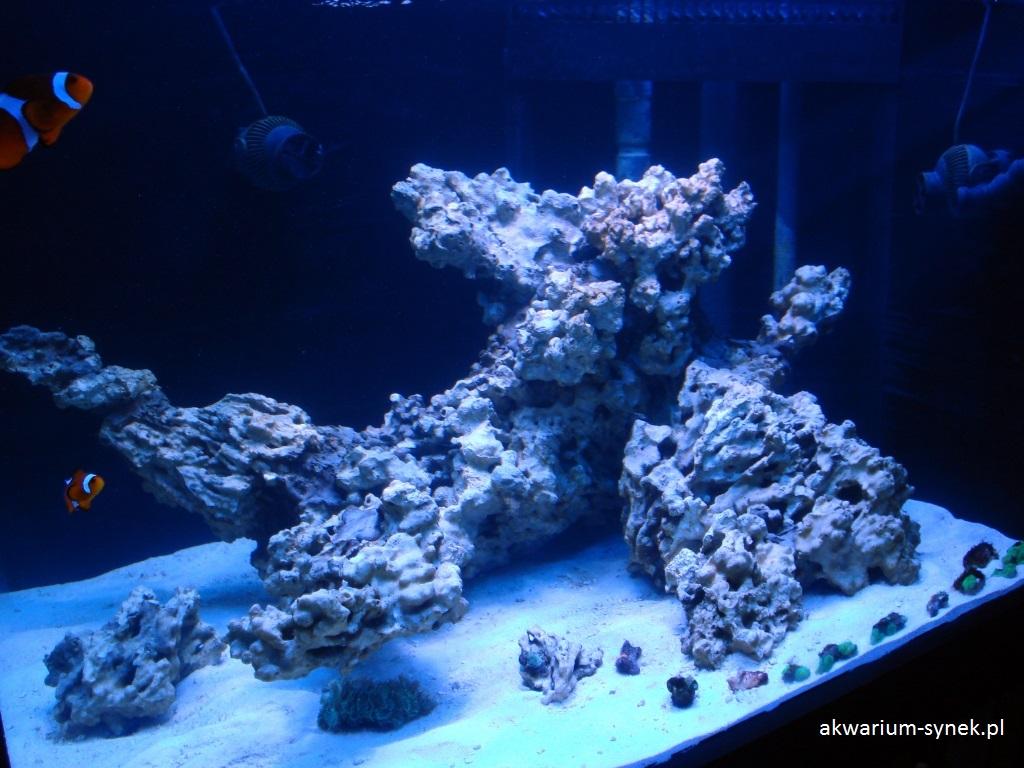 akwarium-460l-synek-86